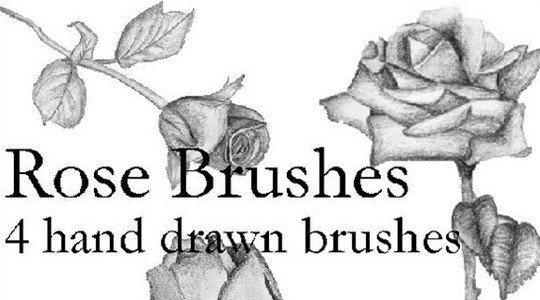 hand drawn rose brushes