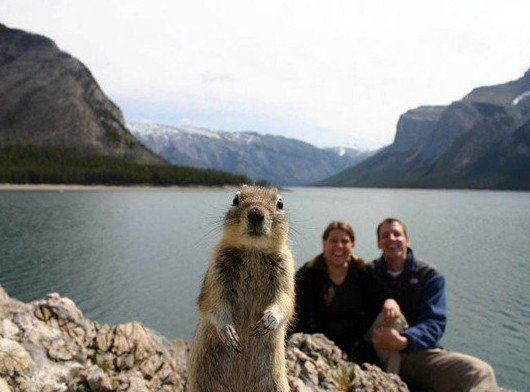 squirrel photoboMB banff
