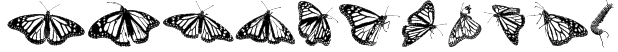 WL Royal Flutter Dingbats Font