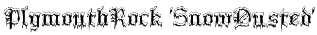 PlymouthRock 'SnowDusted' Font
