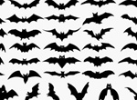 Halloween Silhouette Bats Vector Set