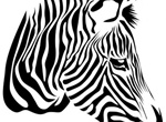 Black Striped Zebra Vector Illustration