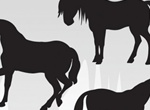 3 Vector Silhouette Horses
