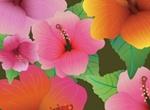 Delicate Hibiscus Vector Flowers