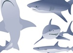 Vector Shark Illustrations