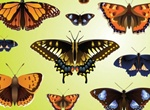 10 Beautiful Butterfly Vectors