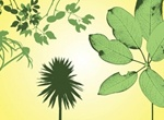 Leaves Nature Silhouette Vector Graphics