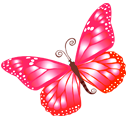 Butterfly, Pink Icon