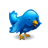 Animal, Bird, Blue, Twitter Icon